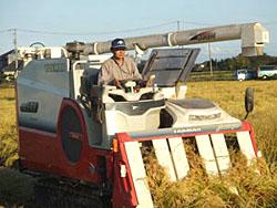 無農薬米ひとめぼれ収穫