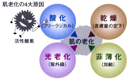 老化の原因活性酸素の図